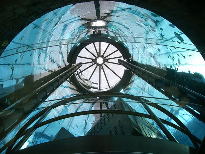 AquaDom-in-Radisson-Blu-Hotel-Berlin-Germany-10