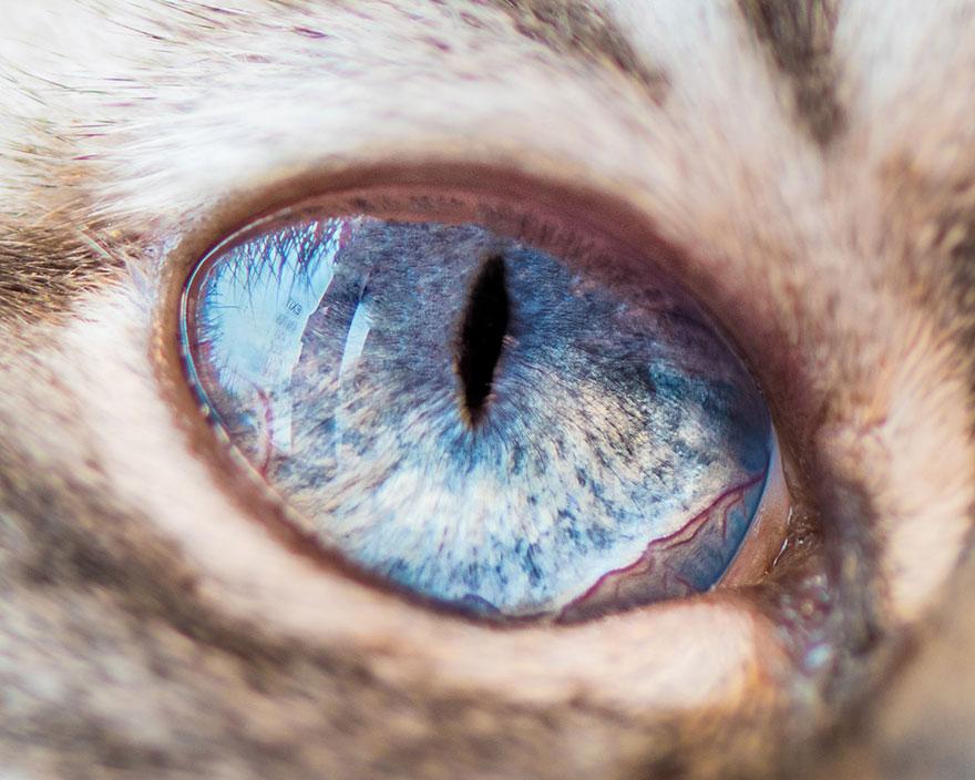 15-Macro-Shots-of-Cat-Eyes10__880