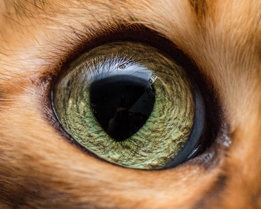 15-Macro-Shots-of-Cat-Eyes1__880