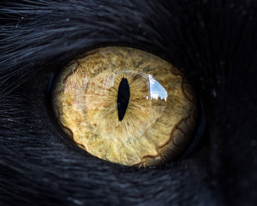 15-Macro-Shots-of-Cat-Eyes5__880