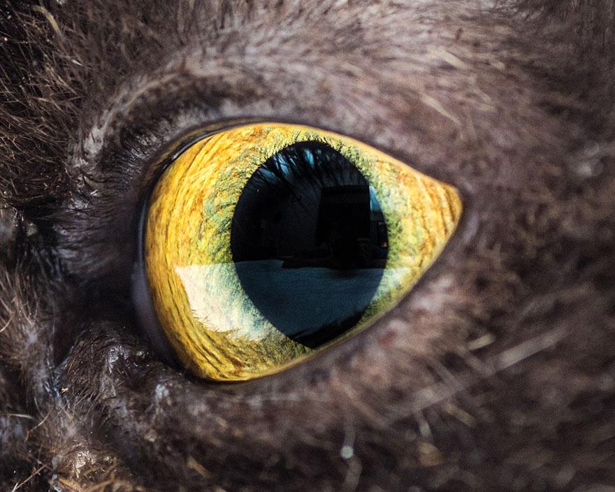 15-Macro-Shots-of-Cat-Eyes7__880