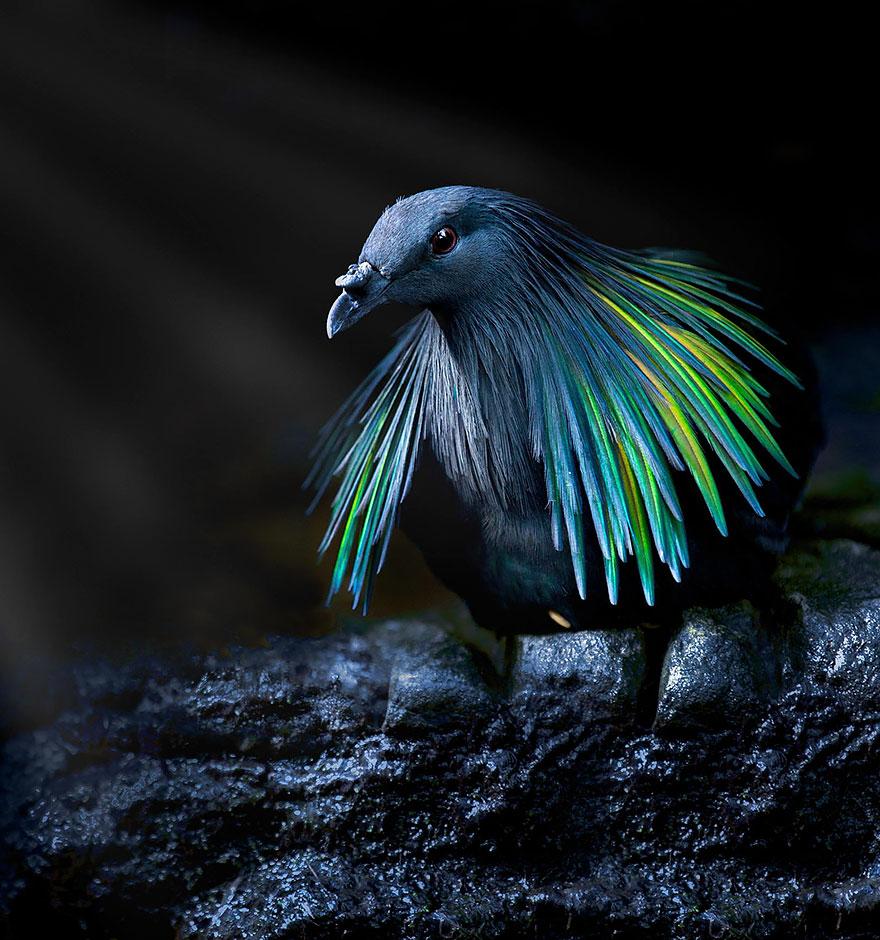 Die älteste Vogelart